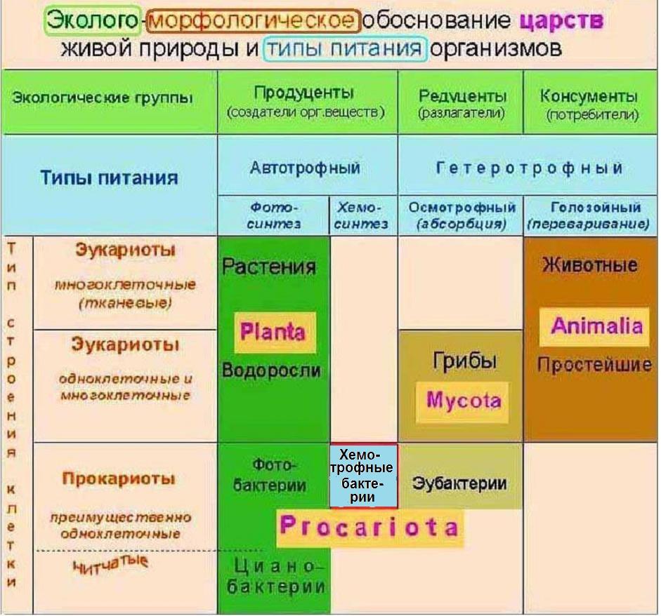 8 Экология и царства живого-таблица