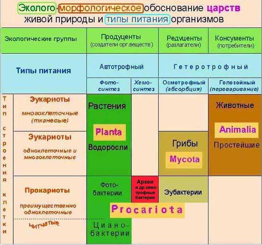 Экология-и-царства-живого-таблица