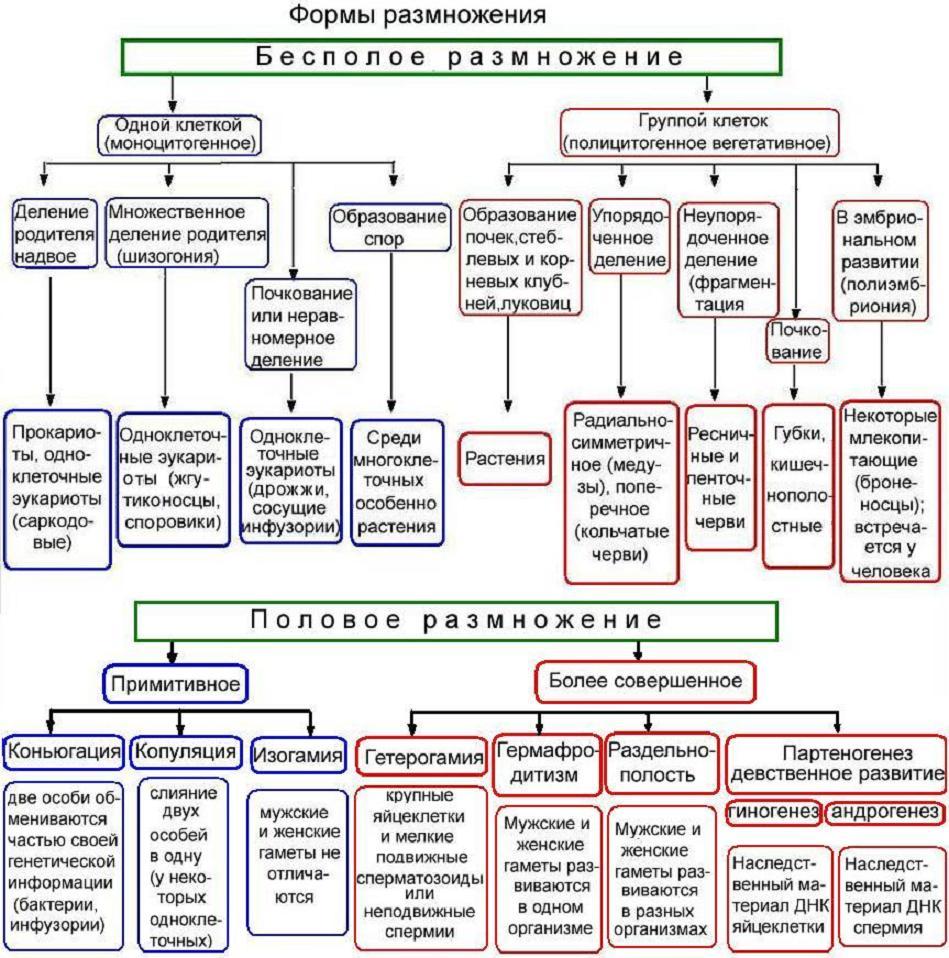 схема царства растений по биологии