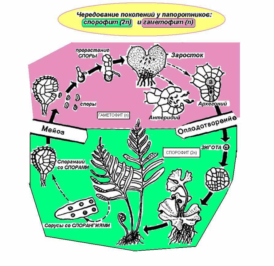избавиться от паразитов в организме лекарства