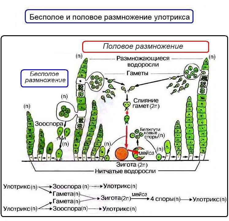 удаление паразитов из организма