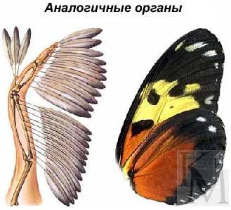 Гомологичные и аналогичные органы