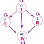 Задачи на определение групп  крови и резус-фактора