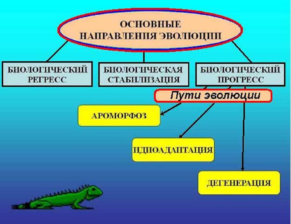 11 Основные направления и пути эволюции