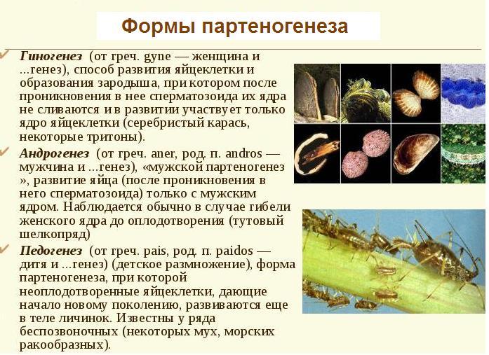 Формы партеногенеза