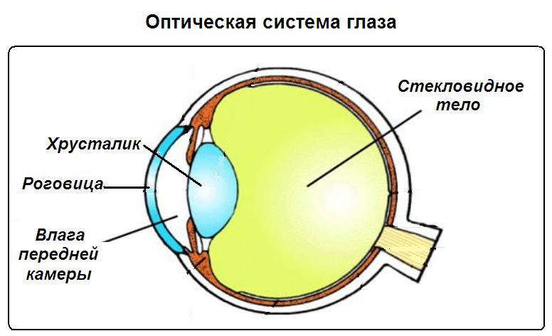 Оптическая система глаза