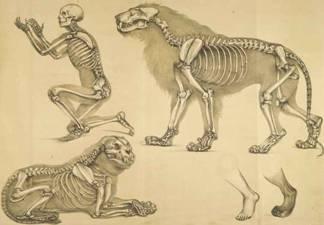 1.8 Сходство скелетов