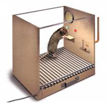 2.6 Обучение крысы