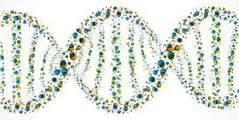 21.3 Трехмерная модель ДНК