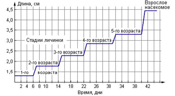 21.8 График роста насекомого 1