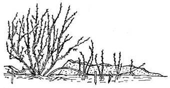 49.10. Размножение растений отводками