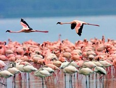 6.4 Популяция фламинго