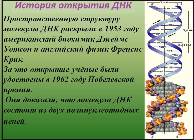 Решение задач по молекулярной биологии с ответами задачи с помощью таблиц истинности с решением